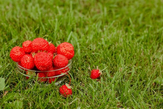 Стеклянный шар, полный клубники на зеленой траве