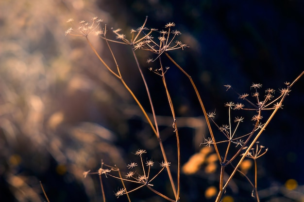 Абстрактный естественный фон с растениями на поле