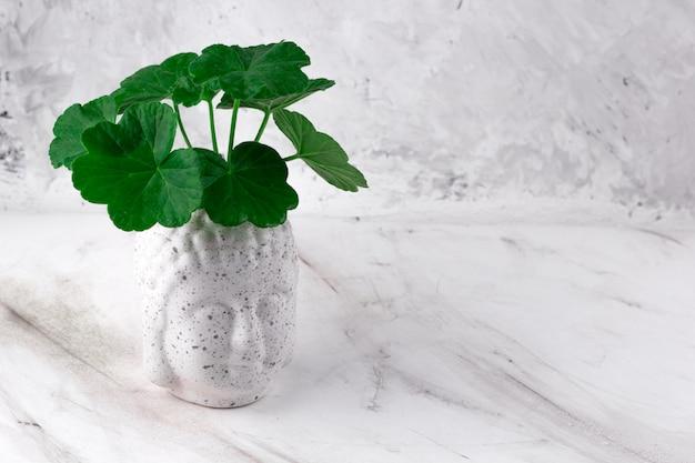 コンクリートの背景に緑の植物と仏頭