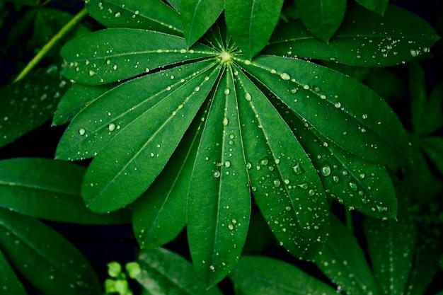 Вид сверху зеленые мокрые листья с каплями воды на черном фоне