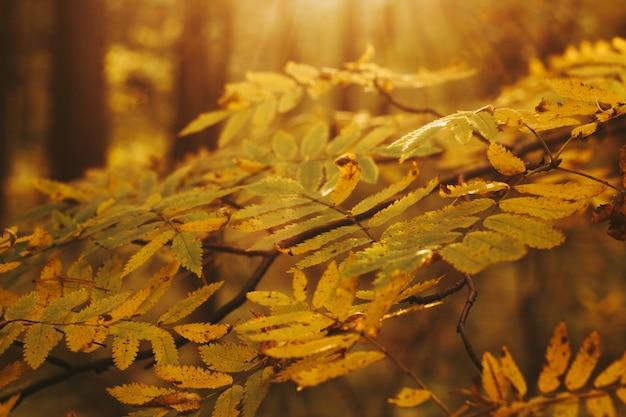 Осенние лесные деревья желтая листва