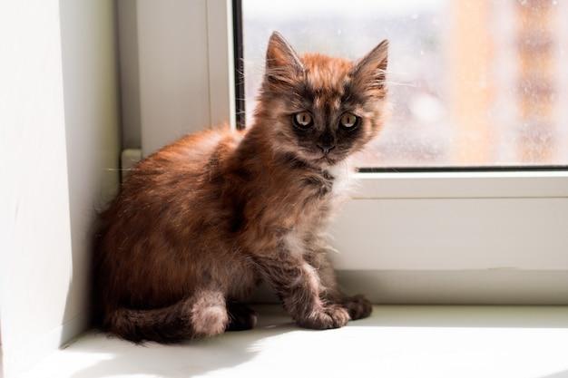 Милый маленький пушистый котенок на подоконнике