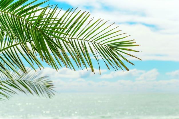 青い空と水に対してヤシの緑の葉
