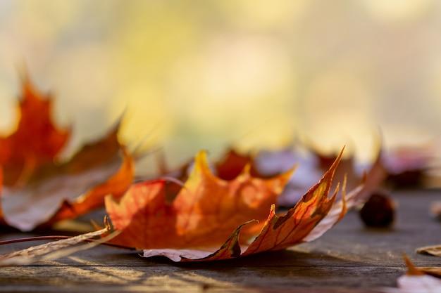 木製のテーブルに黄色の秋のカエデの葉