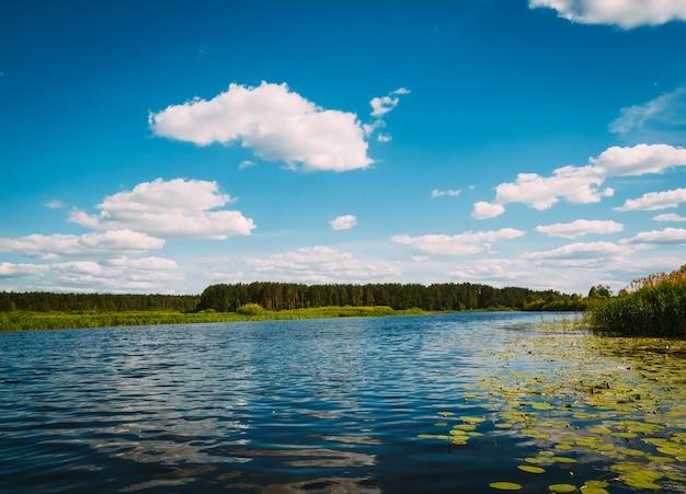 水に睡蓮のある川の風景