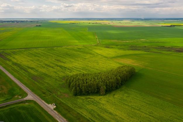 ベラルーシの美しい緑の野原。空撮