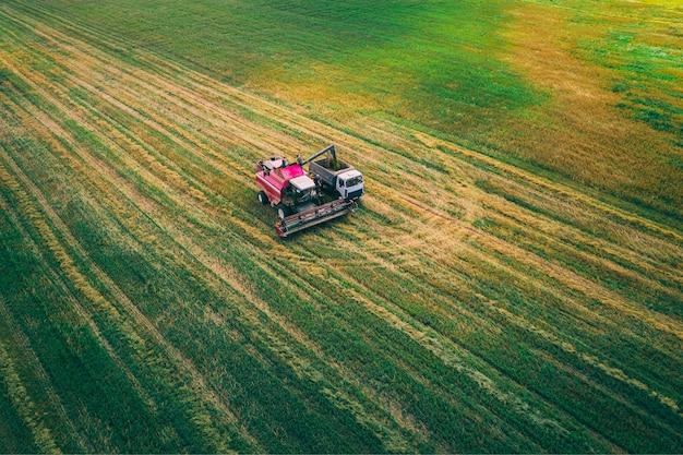 Комбайн собирает сельскохозяйственную полевую культуру. с высоты птичьего полета