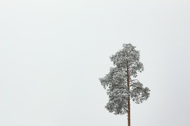 コピースペースで孤独な雪の中で松します。