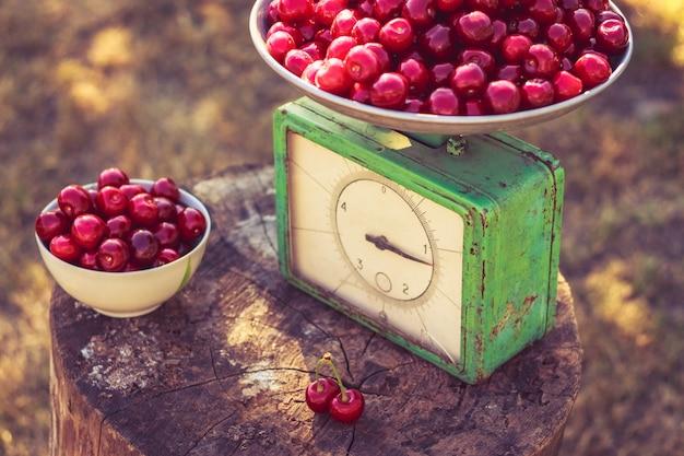 重りと庭の桜の古い切り株