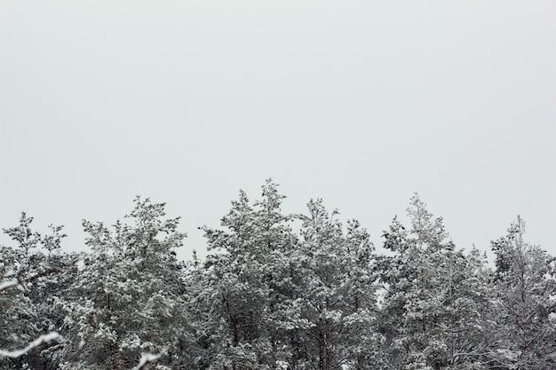 灰色の空を背景に冬の雪の松