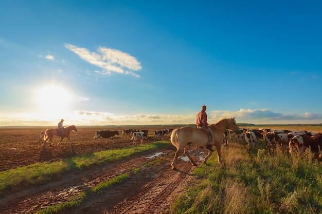 乗馬の羊飼いは牛を放牧します