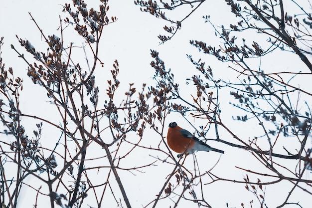 木の枝にウソ鳥