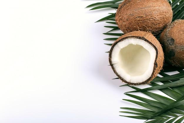 ココナッツとヤシの葉、コピースペース。夏の気分、熱帯、空白。
