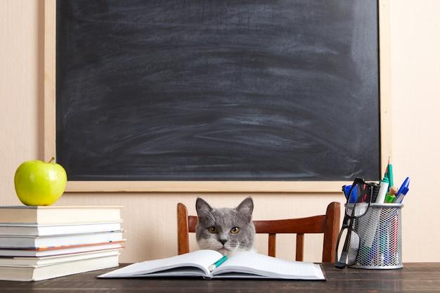 灰色の猫は本やノートをテーブルに座って家で勉強しています。