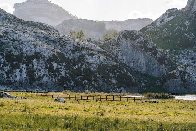 Лошади пасутся на зеленом лугу в окружении гор