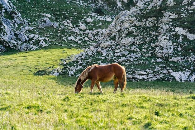 Лошадь пасется на зеленом лугу в окружении гор