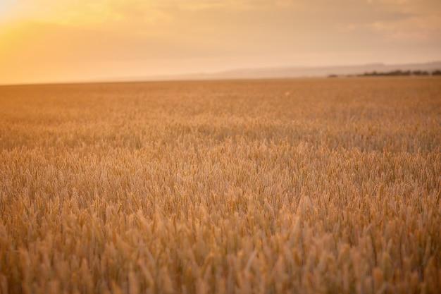 輝く太陽の下での田園風景