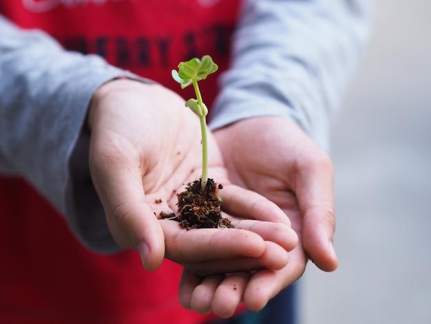 小さな植物を持っている手。