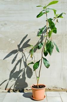 Домашнее растение в горшке, интерьер ресторана, солнце и тени.