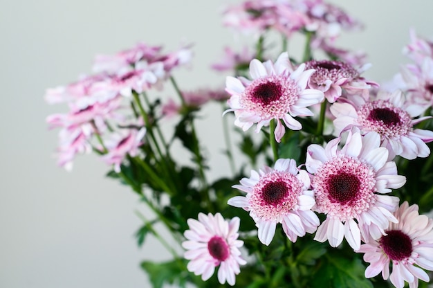 テキストのスペースを持つ灰色の背景上の透明な花瓶に紫のヒナギク