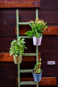 植木鉢、装飾的な梯子が付いている植物の立場。インテリアデザイン、部屋の装飾