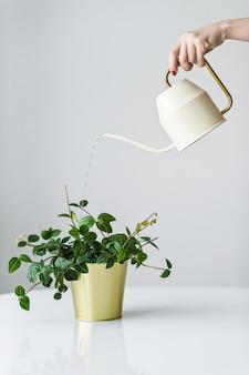 水まき缶からの手のじょうろは、金の鍋で植えることができます。