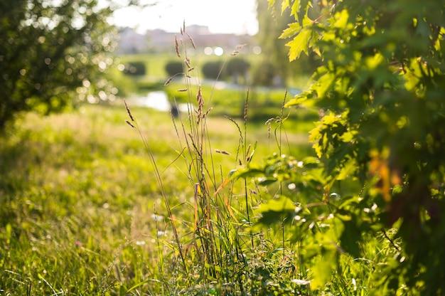 Абстрактный естественный сад с красотой боке. поле цветов.