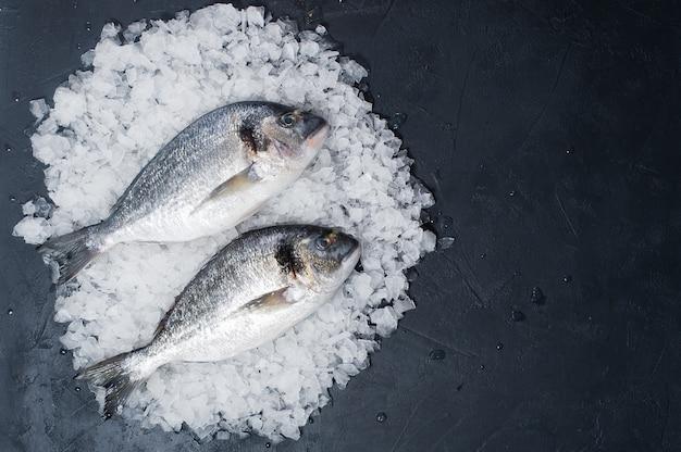 生のドラドは氷の上で釣ります。