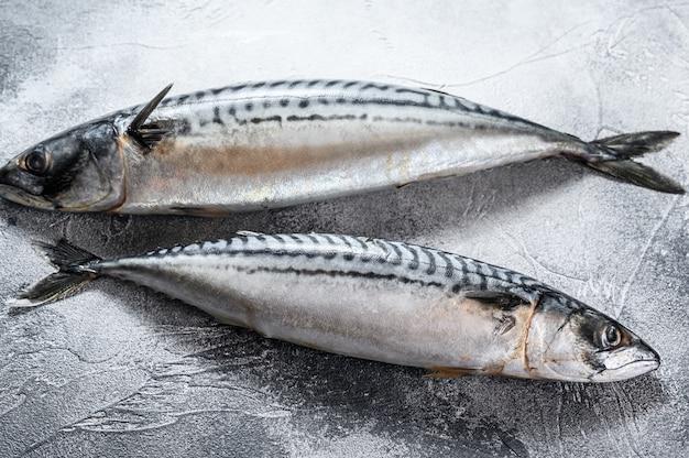 Скумбрия рыба. свежие морепродукты.