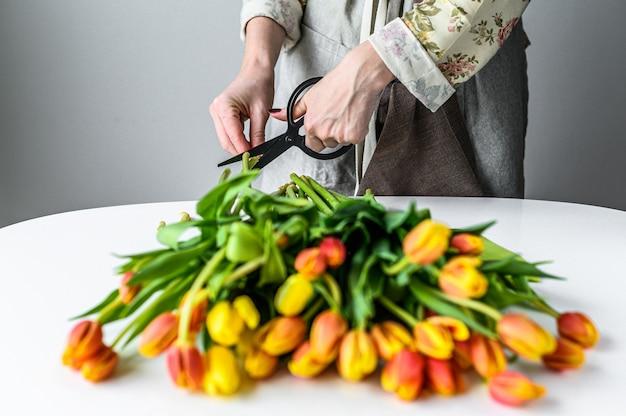 ハサミを手にした花屋の少女は、黄色、オレンジ、赤のチューリップの花束を作ります。白色の背景