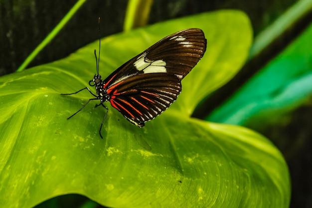 背景が緑色の蝶