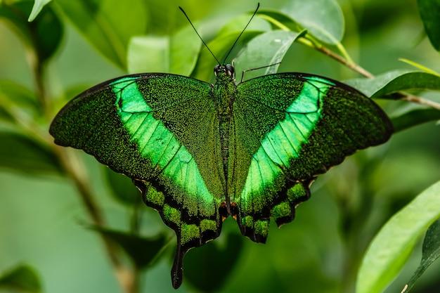 緑の背景と緑の蝶