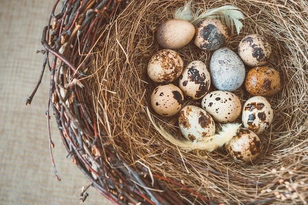 卵と鳥の巣