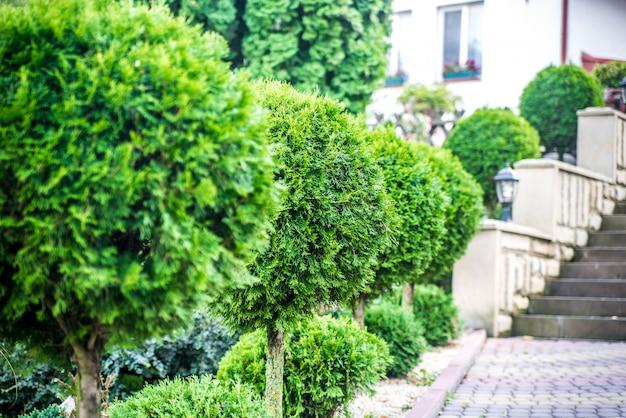 丸い緑の茂みのライン