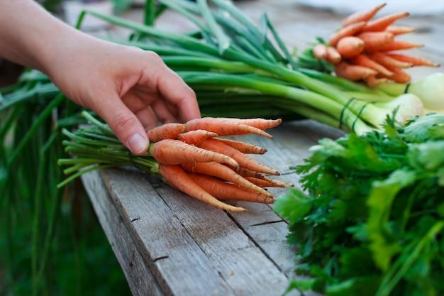 Женщина со свежей органической морковью и зелеными травами на старый деревянный стол в саду