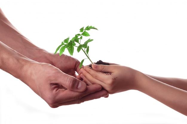 男と子の手で分離されたトマトの苗と土