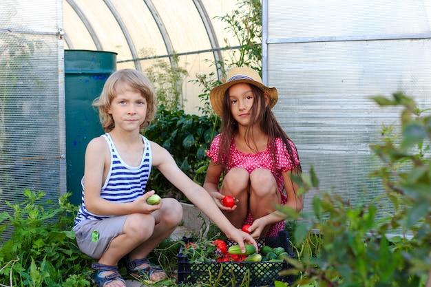 Мальчик и девочка выходят из теплицы с корзиной свежих овощей
