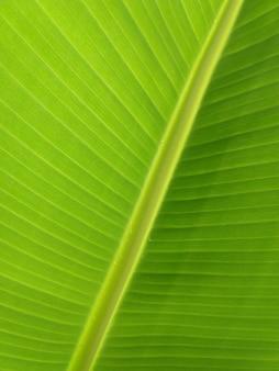 バナナの木の葉をクローズアップ