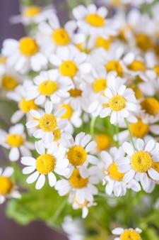 ヒナギクの花束
