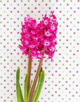 ピンクのヒヤシンスの花