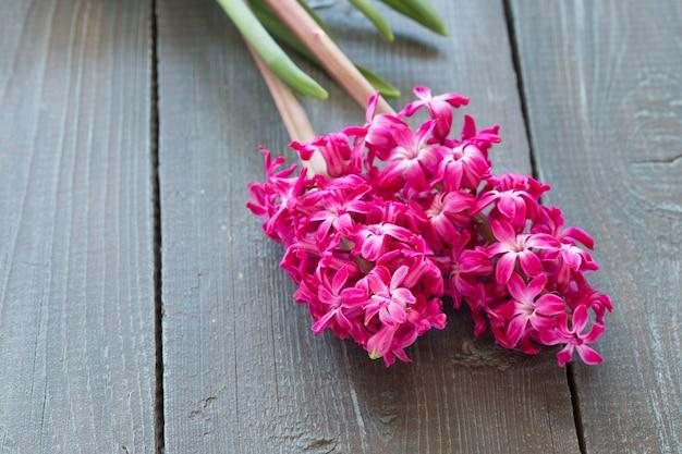 Цветы розового гиацинта