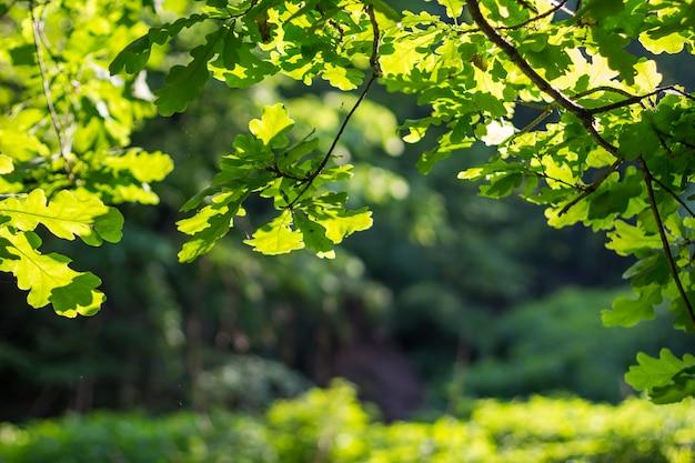 Ветки с листьями на зеленом фоне