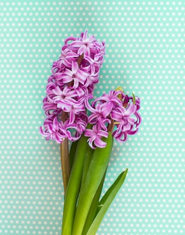 紫のヒヤシンスの花