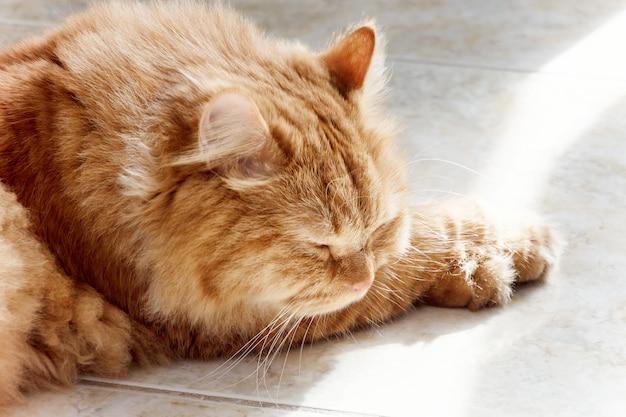 Милый рыжий кот спит на солнце.