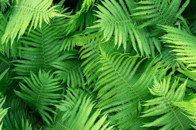 Зеленый папоротник фон, свежие зеленые листья текстуры