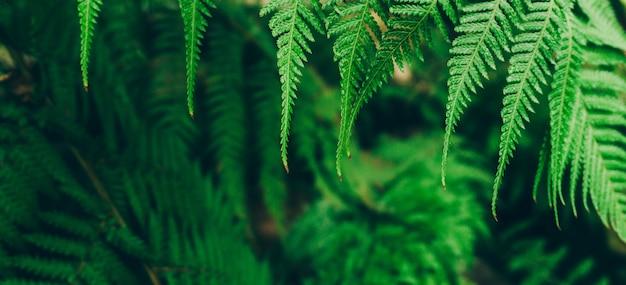 Фон растения джунглей. тропические заросли и кустарники в джунглях.