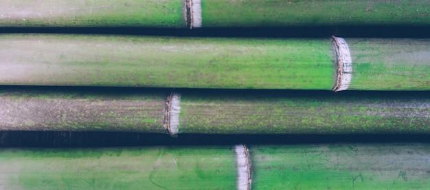 グリーン竹の背景