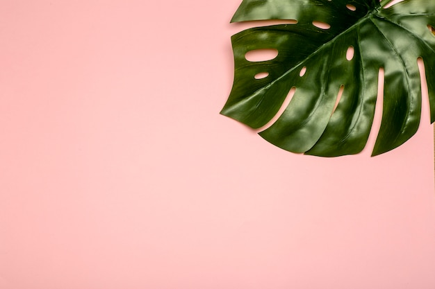 モンステラの葉の背景。パステルカラーの背景に熱帯のジャングルのヤシを残します。コピースペース