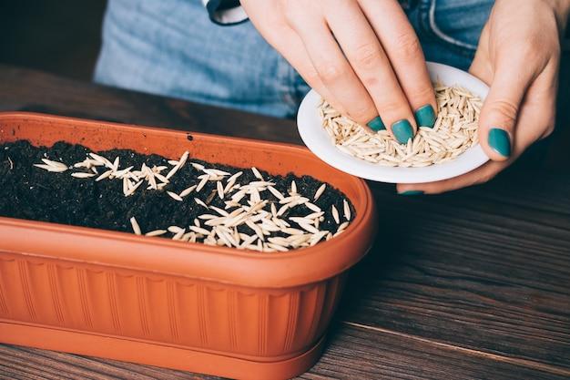 女性の手が花用のプラスチック製の鍋で土に種を注いだ