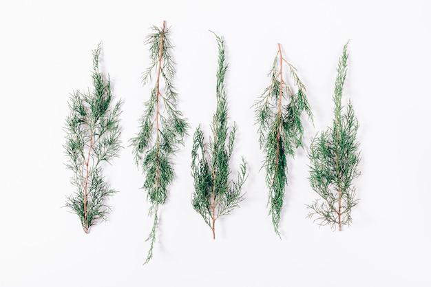 針葉樹の小枝